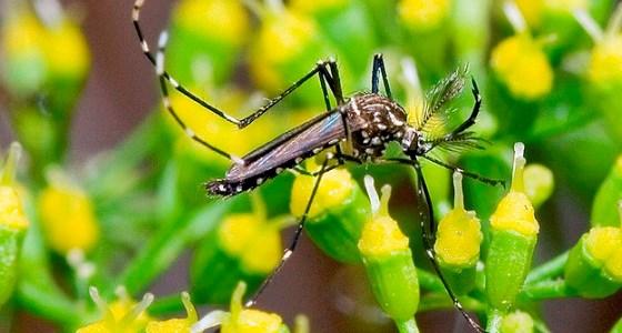aquecimento-global-aumenta-proliferacao-mosquitos-560w